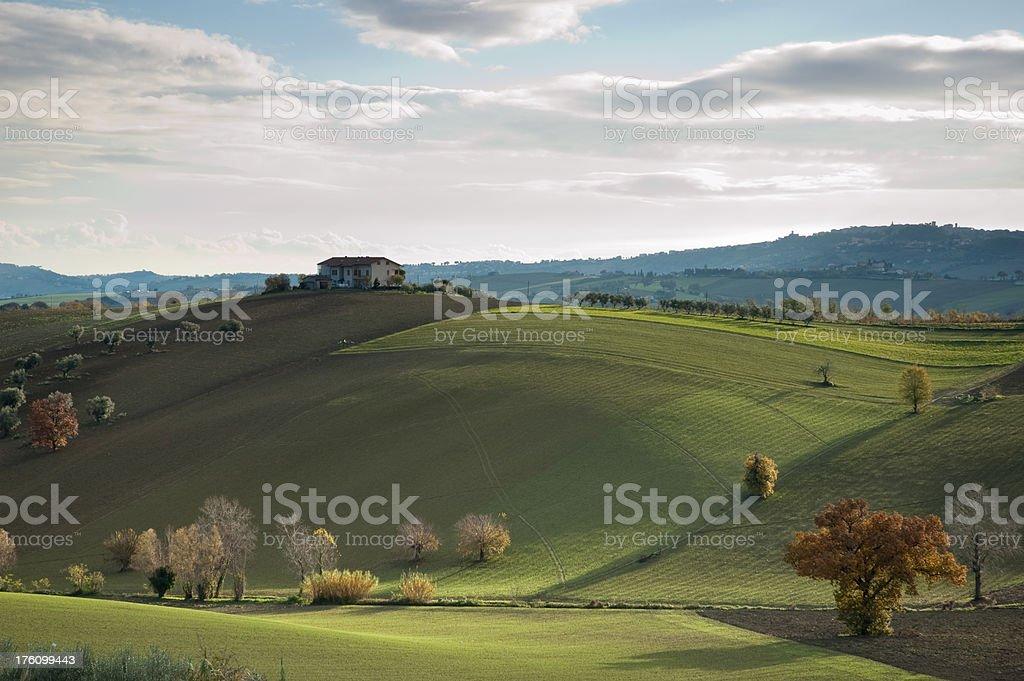 Morning greens royalty-free stock photo