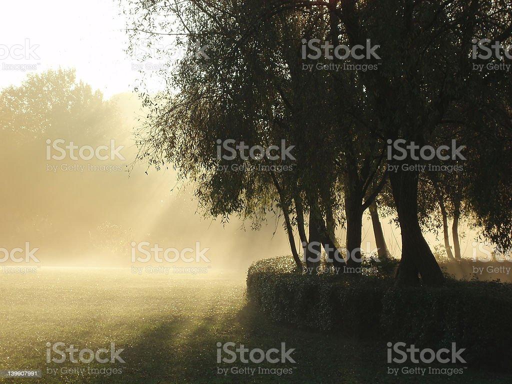 Morning has broken royalty-free stock photo