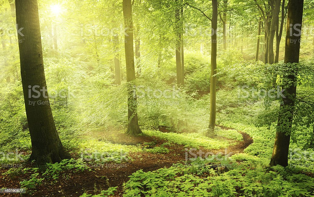 Morning in a green summer forest stock photo