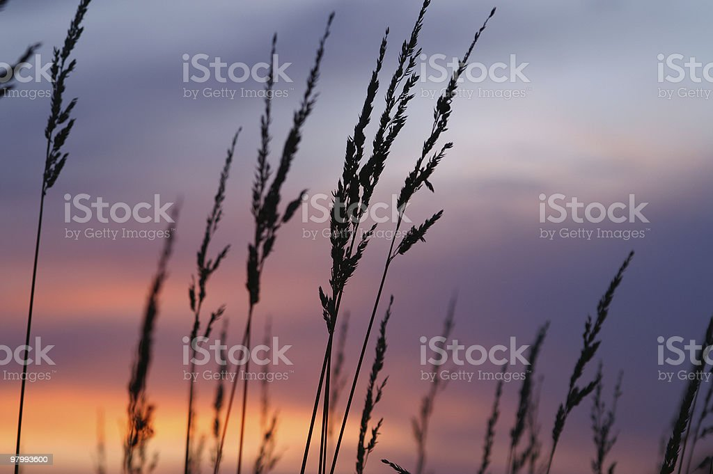 Morning in Maine royalty free stockfoto
