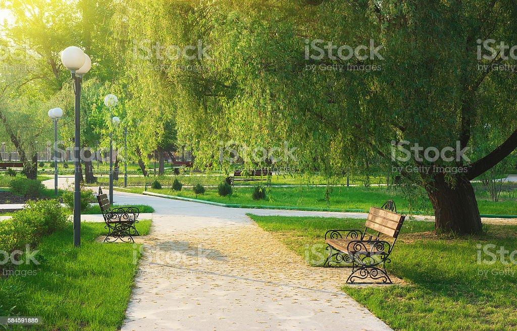 Morgen im park – Foto