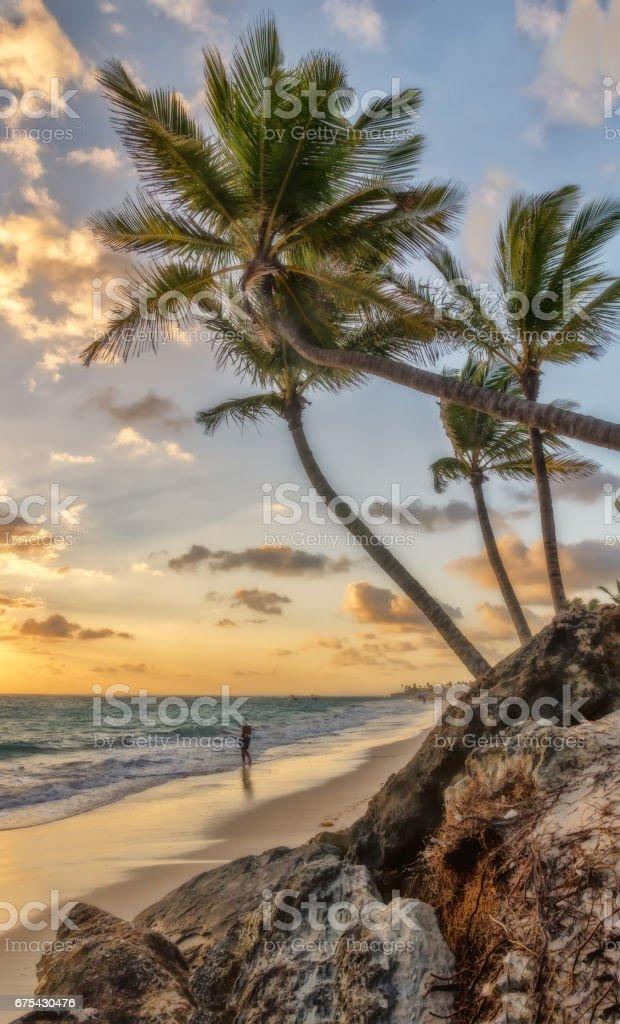 Punta Cana sabah. royalty-free stock photo