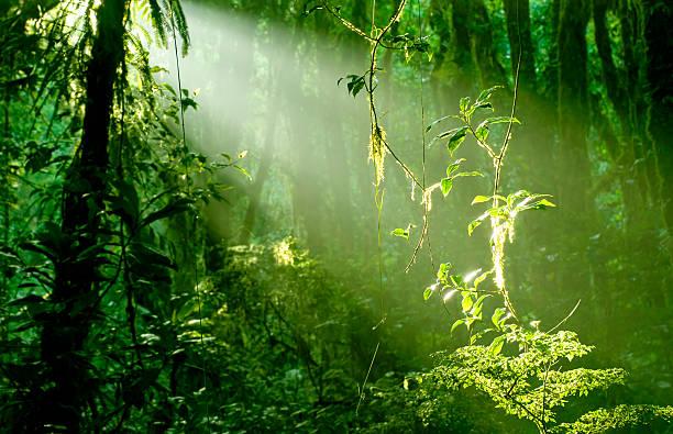 Morgen im Regenwald – Foto