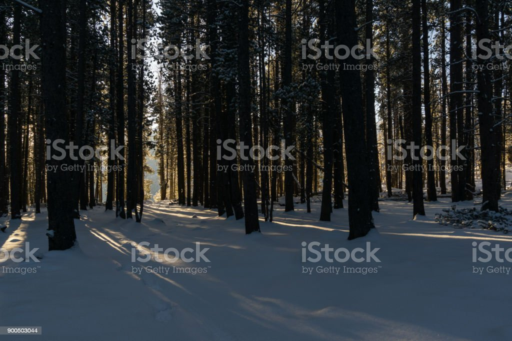 Morning in Rocky Mountain National Park stock photo