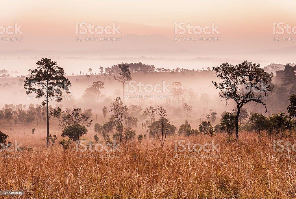 Morning in savannah royalty-free stock photo