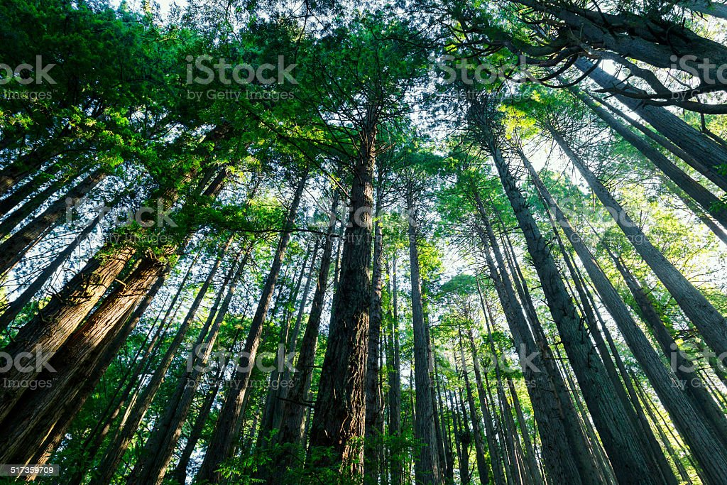 Morning in Sequoia National Park stock photo