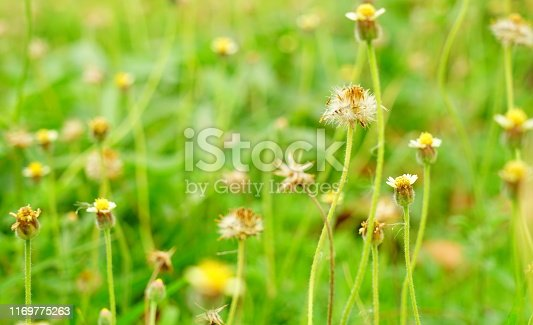istock Morning in the field 1169775263