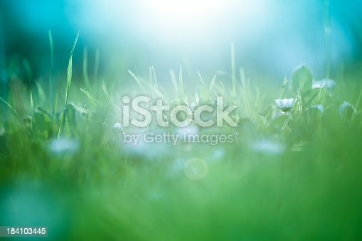 istock Morning in the field 184103445