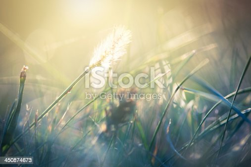 istock Morning in the field 450874673