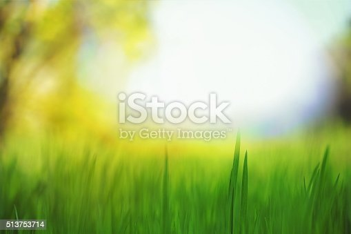 istock Morning in the Field 513753714