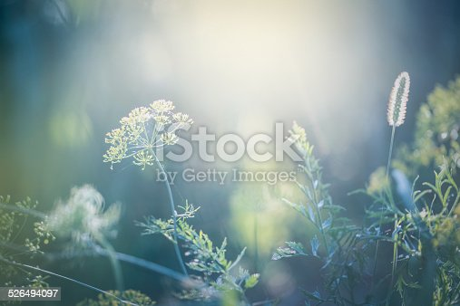 Morning light over  wildflowers.