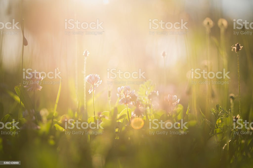 Morning in the field royalty-free stock photo
