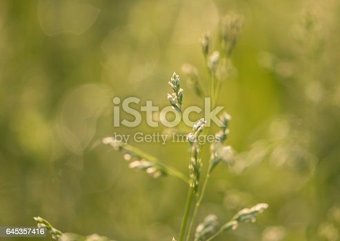 istock Morning in the field 645357416