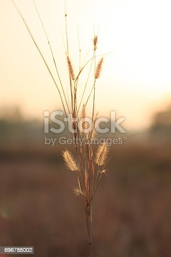 istock Morning in the field 696788002