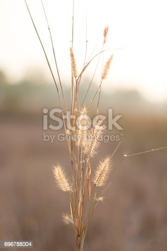 istock Morning in the field 696788004