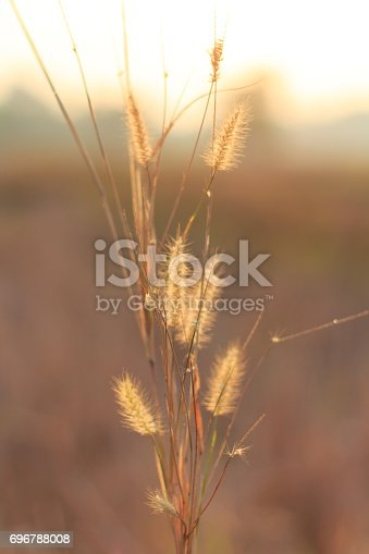 istock Morning in the field 696788008