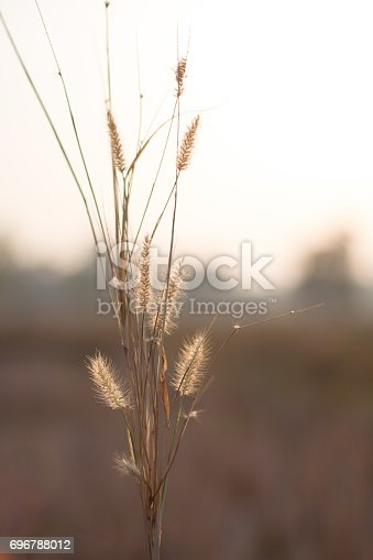 istock Morning in the field 696788012
