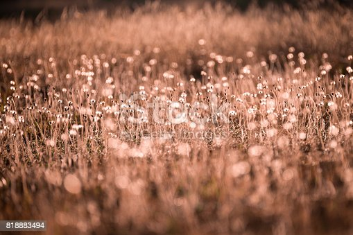 istock Morning in the field 818883494