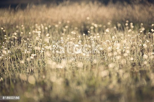 istock Morning in the field 818900186