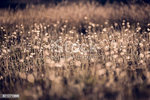 istock Morning in the field 821271998