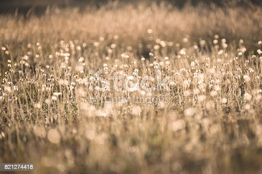 istock Morning in the field 821274418