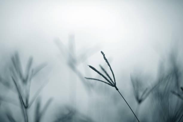 Morning in the field picture id858472946?b=1&k=6&m=858472946&s=612x612&w=0&h=d3qydkuzcgsiqy5wzmilkp5 gc3addzjlxw9io7r290=