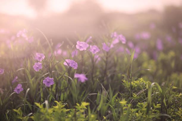 Morning in the field picture id876809092?b=1&k=6&m=876809092&s=612x612&w=0&h=kvu ck2ajktt1db8pggix69bh13oydhphozrkxw1a9u=