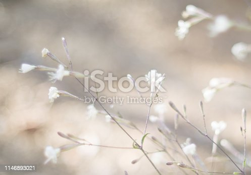 istock Morning in the field .Summer Meadow 1146893021