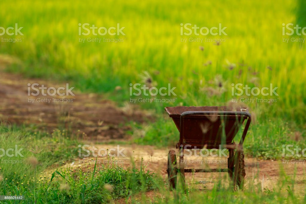morning in the field with flower stock photo