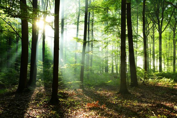 Morgen im Wald – Foto