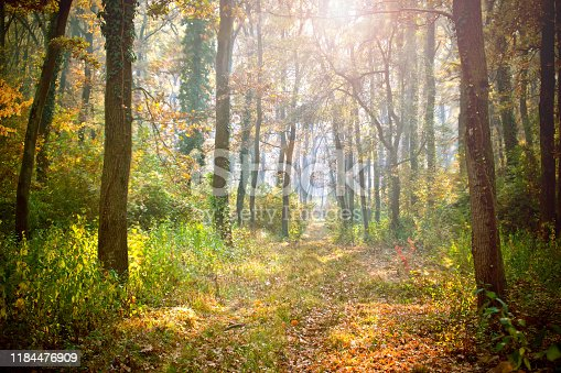 Sunny colorful forest in the summertime.Scenery of nature with sunlight