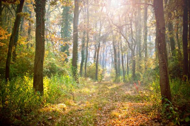 matin dans la forêt - couleur des végétaux photos et images de collection