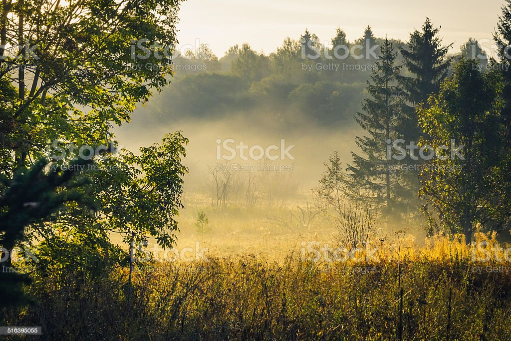 Morning in the forest. stock photo