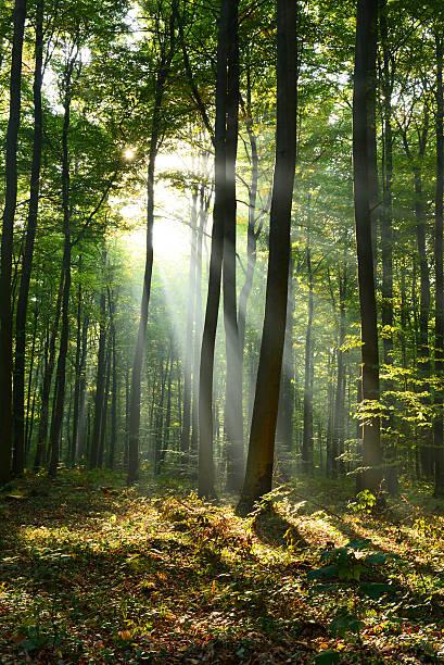 Morgen in den Wald  – Foto