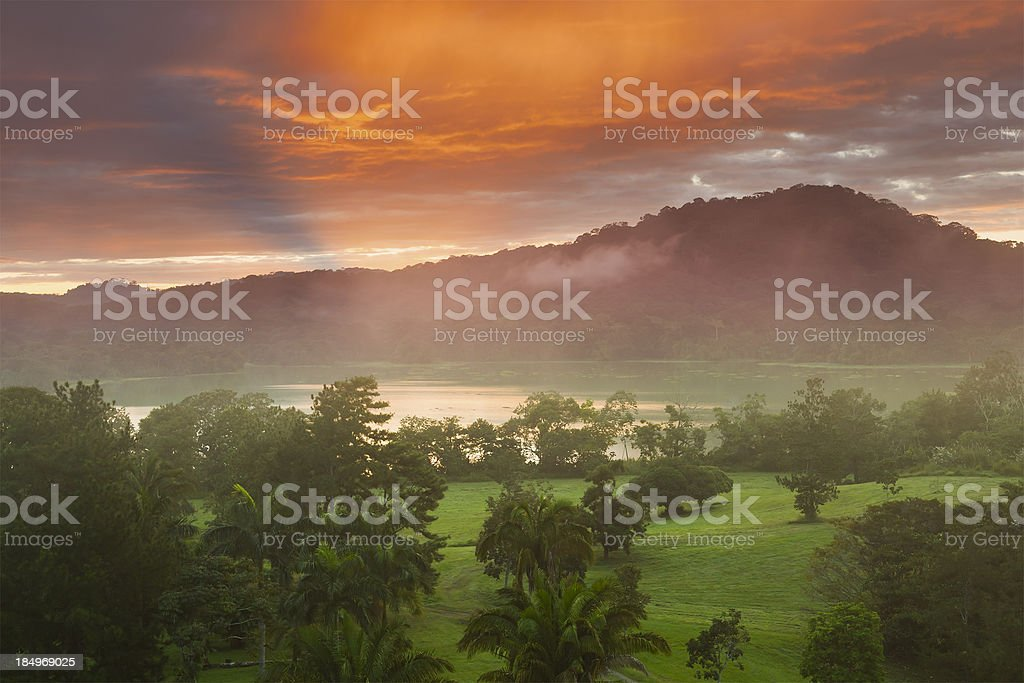 Morning in the RainForest stock photo