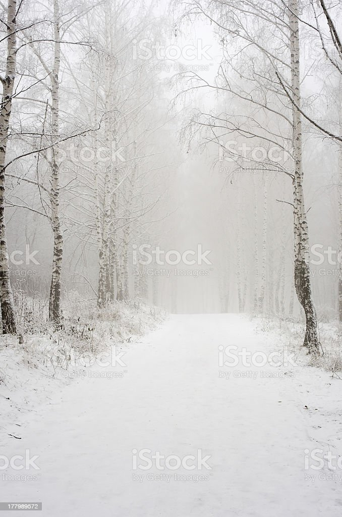 Morning in the winter wood royalty-free stock photo