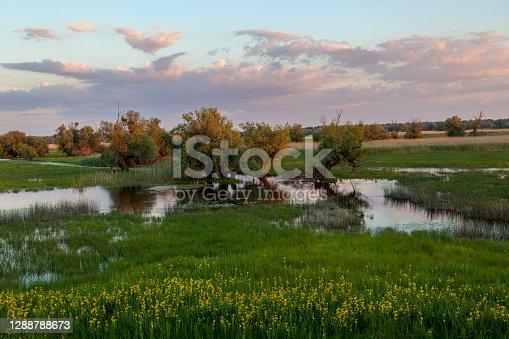 Morning in wetland, Kopacki rit, Croatia