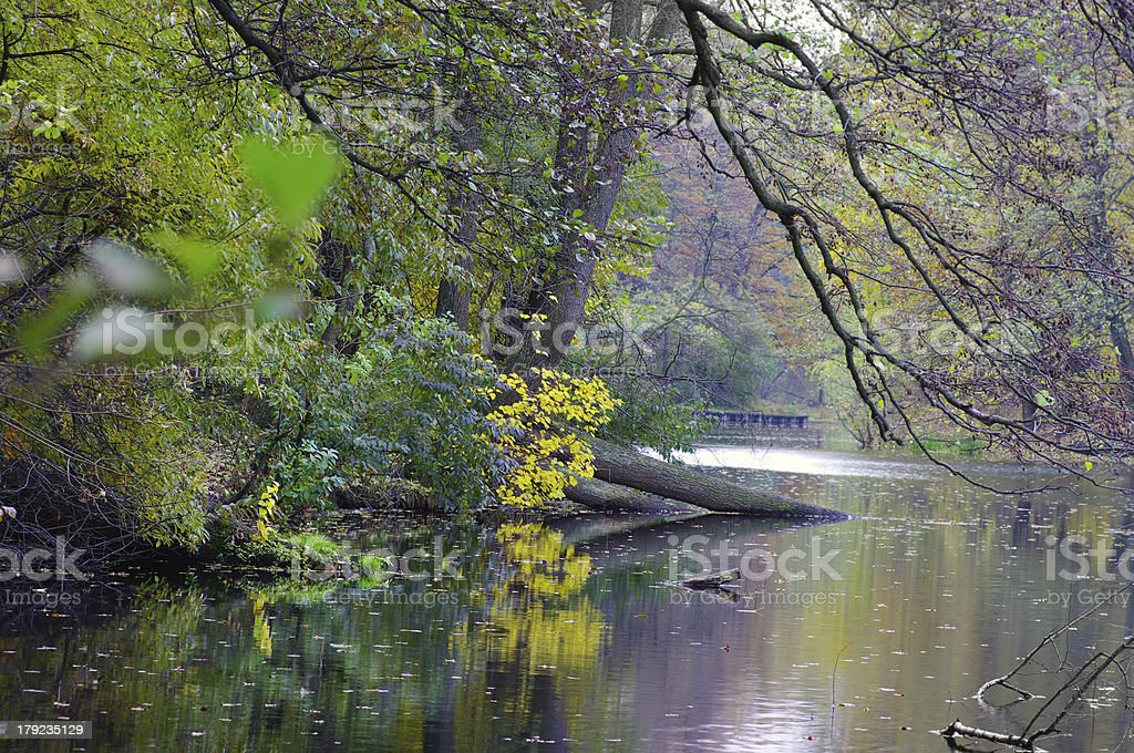 Morning in wood near a lake royalty-free stock photo