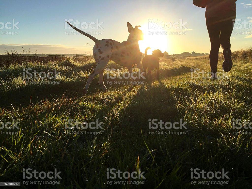 Joggen am Morgen mit den Hunden - Lizenzfrei 2015 Stock-Foto