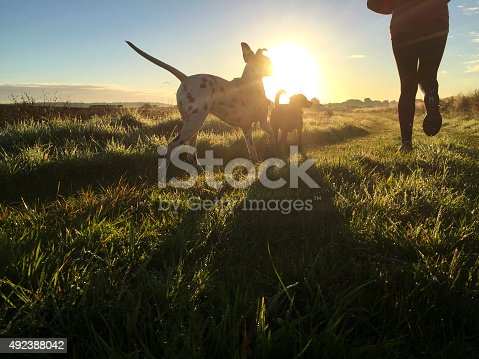 Woman out running along a grassy track with her two dogs. Rear view if get legs with both dogs in view. Early morning light creates shadows at atmosphere. Shot on iPhone 6