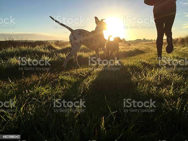 Joggen Am Morgen Mit Den Hunden Stockfoto und mehr Bilder von 2015