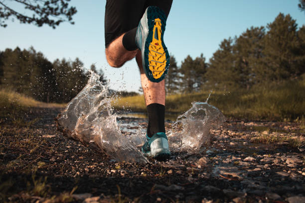 Morning jogging in a forest stock photo