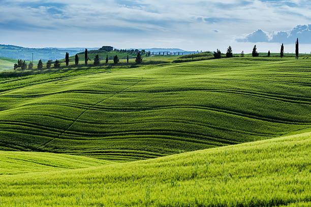 Matin paysage de la Toscane - Photo