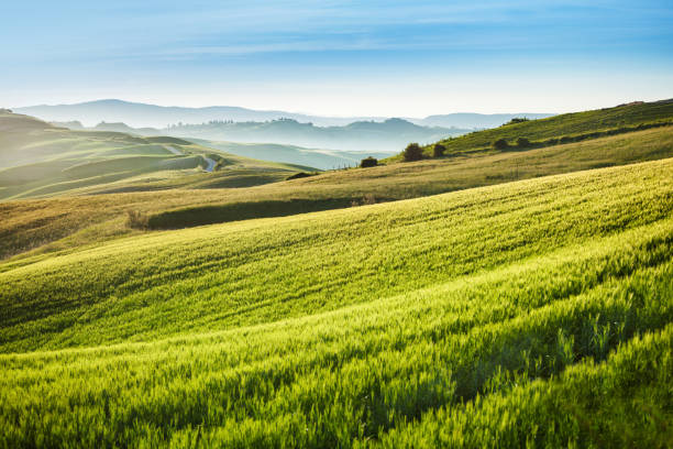 Morning Landscape - Spring fields in Tuscany stock photo
