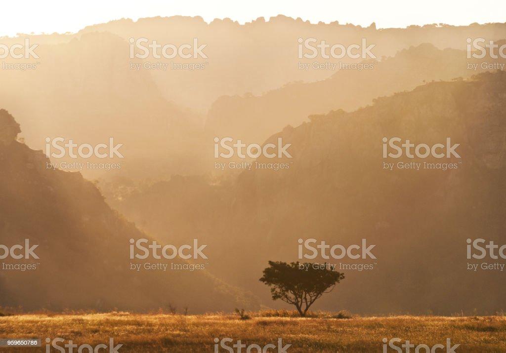 Paisaje con árbol y roca formaciones en mañana. Madagascar - Foto de stock de Amanecer libre de derechos