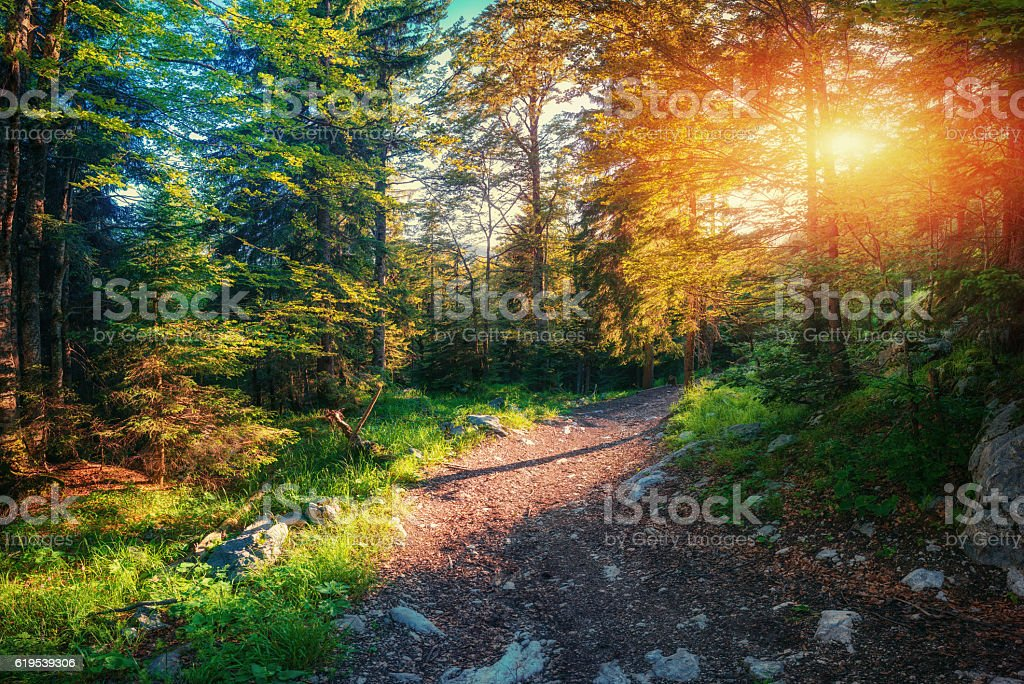 Morgenlicht fällt auf eine forest road – Foto