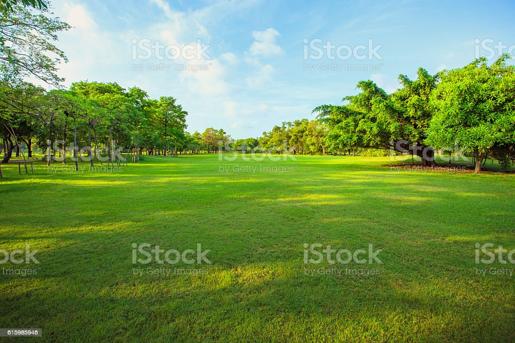 morning light in public park and green stock photo