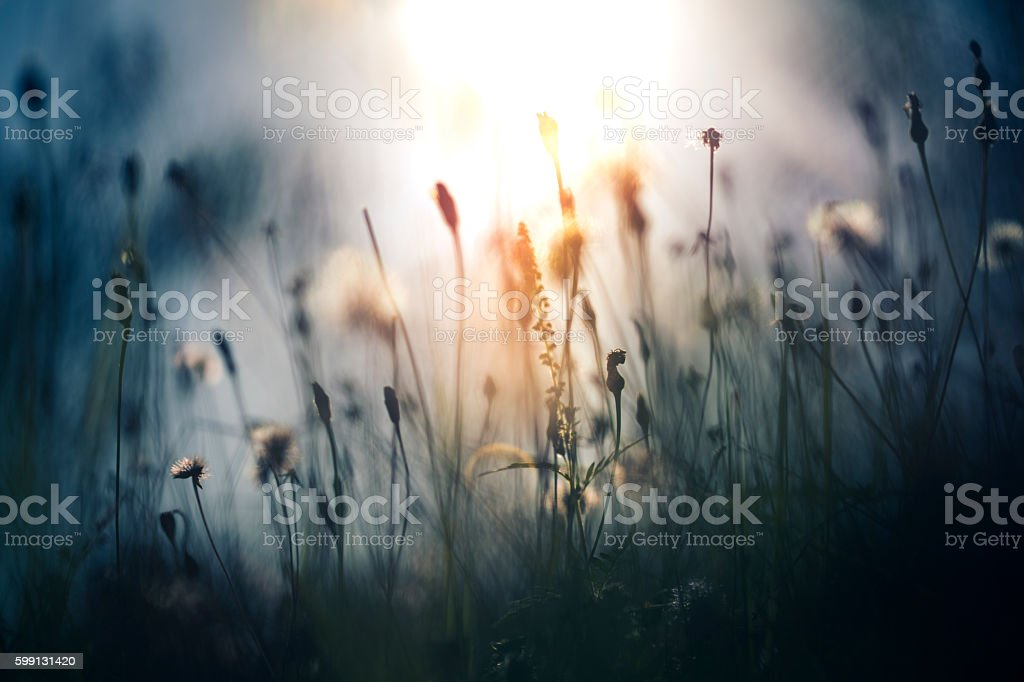 Morning light in the field stock photo
