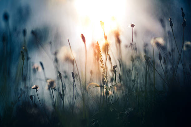 morning light in the field - soft focus stock photos and pictures
