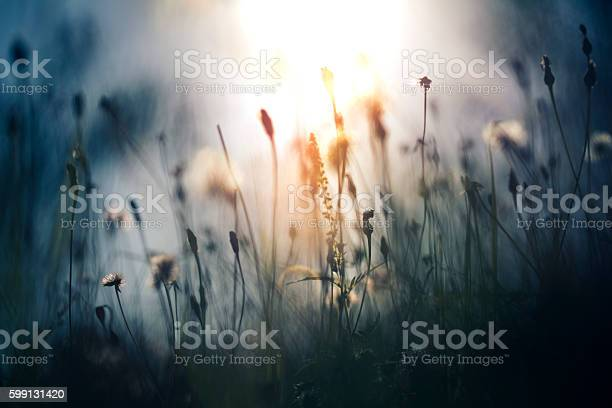 Photo of Morning light in the field